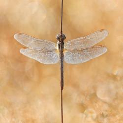 tableau-déco-ailes-de-libellule